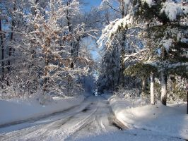 Wisconsin Woods Winter Road 5 by FantasyStock