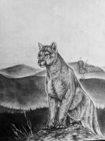 Mountain Lion Drawing by Kuvari