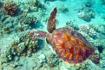 Turtle Glide by manaphoto