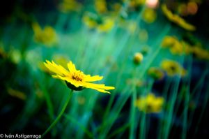 Nature Shots 19 by dargor1406