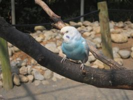 It's actually just a budgie. by AudeS