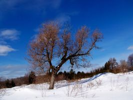 Tree Stock 4 by philippeL-stock