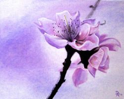 Blossom by DanielleHope