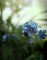 Forget Me Not Green by Callu