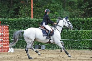 Showjumping VII by firegold