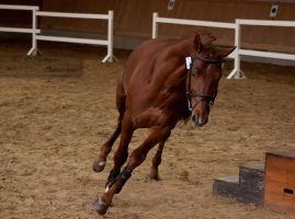 Freejumping Championship 2014_287 by CalyHoney