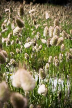 Fluffy Cat Tails by bakanya