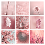 3x3 pink nature photography by Aimelle