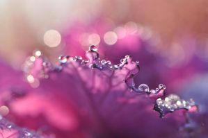 Bokeh flower by Fialu