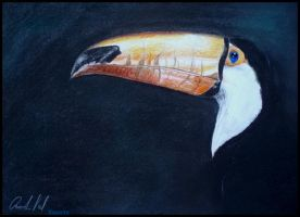 Pastel drawing - Toucan by Ennete