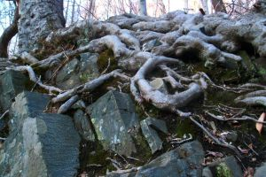 Roots Growing Over Rocks by Lovely-LaceyAnn-Art