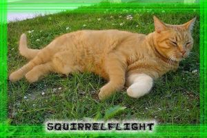 Squirrelflight by Lightning-picz