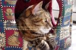 My Cat Presia by lilly-peacecraft