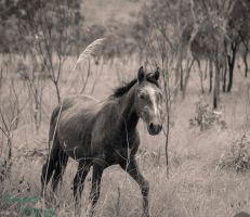 Out Back Horse...3 by midnightrider79