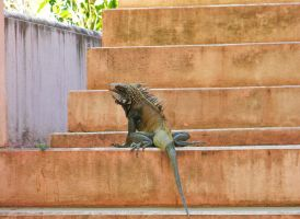 Lizard Stairs by EndOfGreatness