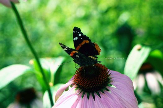Bokeh and Butterflies by Resensitized