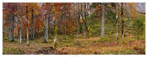 Autumn Colors - 03 by AndreasResch