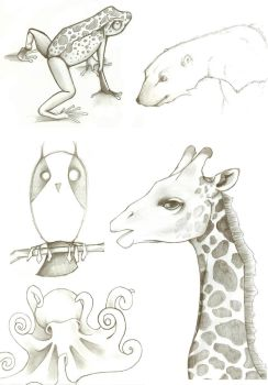 Animals by Little-Rachel