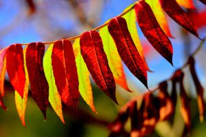 banner... by Pulse72
