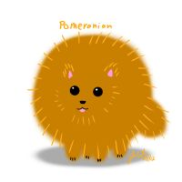 Pomeranian by cat-gray-and-me78