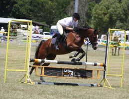 STOCK Showjumping 433 by aussiegal7