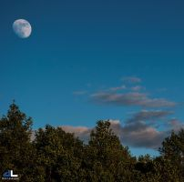 Daytime Moon by imonline