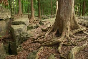 Twisted Roots by nrbennett