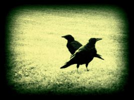 Crossed Ravens by surrealistic-gloom