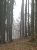 UNRESTRICTED - November '09 - Foggy Forest 15 by frozenstocks