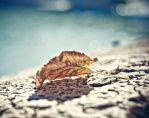 Signs of autumn by Alessia-Izzo