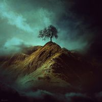 Lonely Tree by BaxiaArt