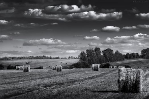 The July hay harvest by hitforsa