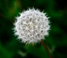 Dandelion II by Moonchilde-Stock