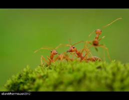 Family by allanddharmawan