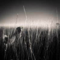 in the grass... by denis2