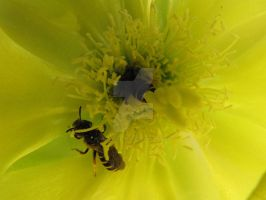 Pollination At It's Finest by Maltese-Naturalist