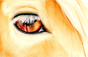 Fire Eyes by SilverFlameWanderer