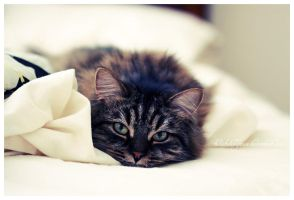 Bed Kitty by twistedelegance