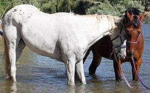 Horseys River 197 by aussiegal7
