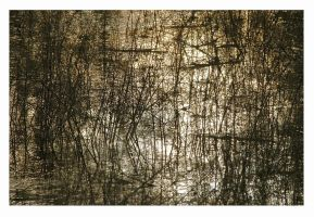 Pollock's pond by MagicWorld