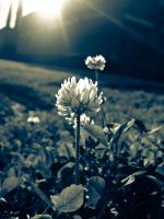 On a Day Like Today by HA91