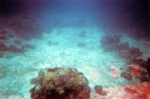 Reef Adventure by lomocotion