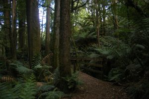 Ferntree Gully 7 by FallowpenStock