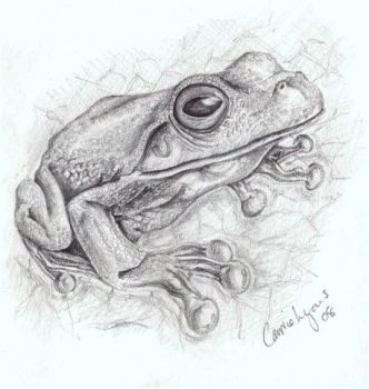 pretty tree frog by carriephlyons