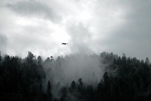 Where the Ravens Fly. by swampliquor