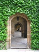 ivy arches by bloomingblaumstock