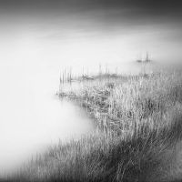 marsh by Hengki24