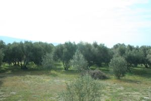 view to olive trees 7 by ingeline-art