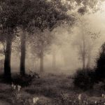 Enchanted Forest II by DilekGenc