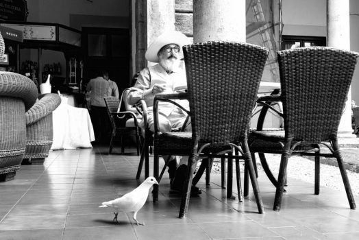 The Old Man and the White Pigeon by ZiaulKareem